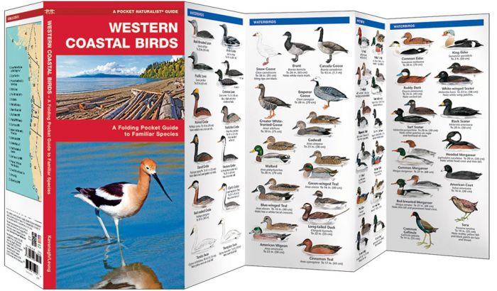 Western Coastal Birds (Pocket Naturalist® Guide).