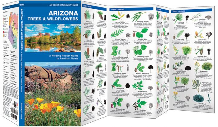 Arizona Trees & Wildflowers (Pocket Naturalist® Guide).