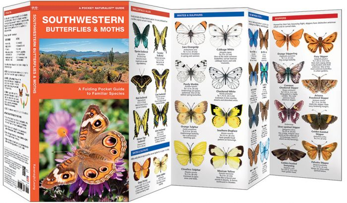 Southwestern Butterflies (Pocket Naturalist® Guide).