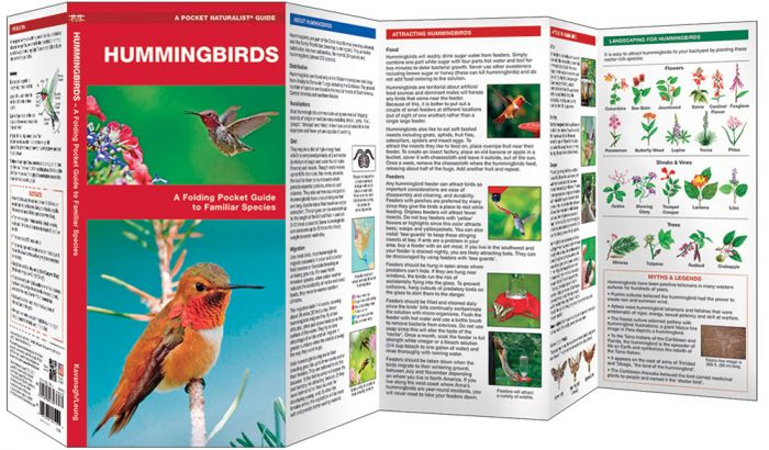 Hummingbirds (Pocket Naturalist® Guide).
