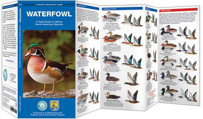 Waterfowl (Pocket Naturalist® Guide).