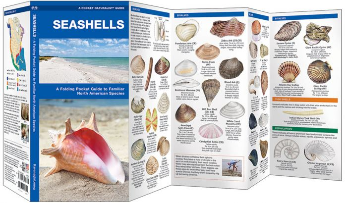 Seashells (Pocket Naturalist® Guide).