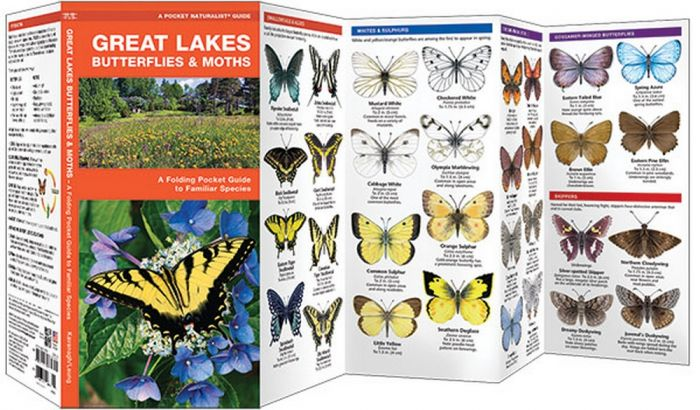 Great Lakes Butterflies & Moths (Pocket Naturalist® Guide)