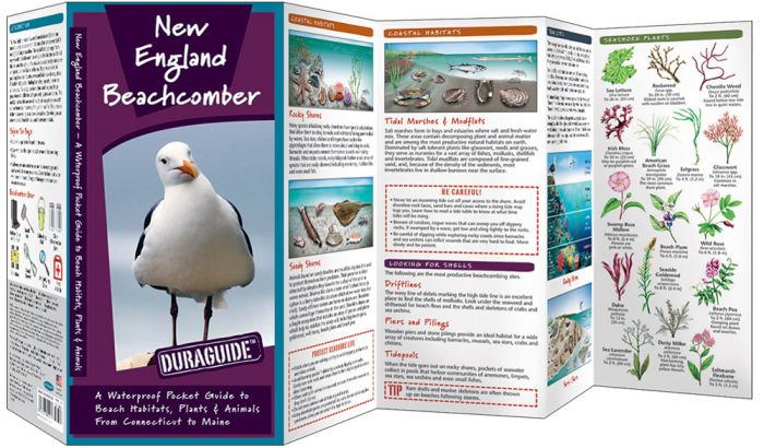 New England Beachcomber (Pocket Naturalist® Guide).