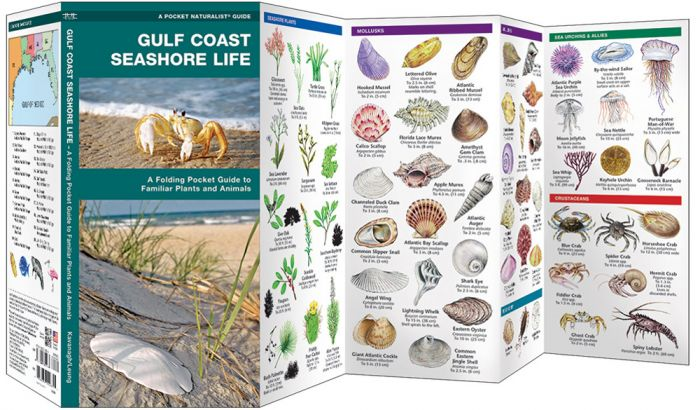Gulf Coast Seashore Life (Pocket Naturalist® Guide).