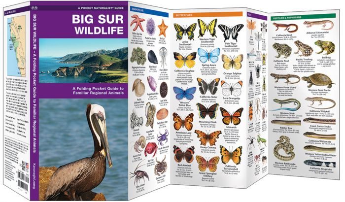 Big Sur Wildlife (Pocket Naturalist® Guide).