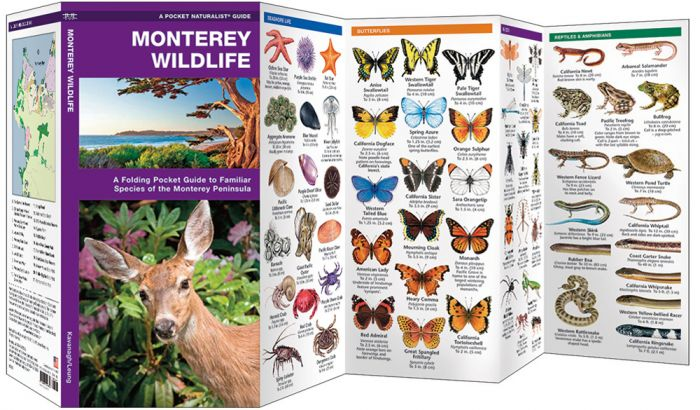 Monterey Wildlife (Pocket Naturalist® Guide).