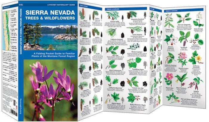 Sierra Nevada Trees & Wildflowers (Pocket Naturalist® Guide).