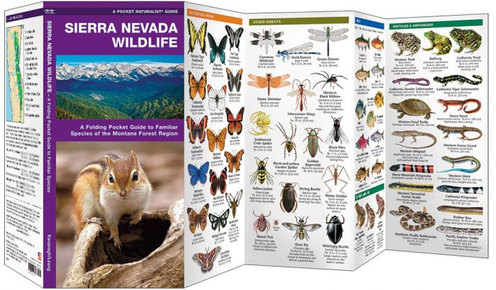 Sierra Nevada Wildlife (Pocket Naturalist® Guide)