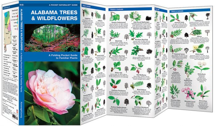 Alabama Trees & Wildflowers (Pocket Naturalist® Guide).