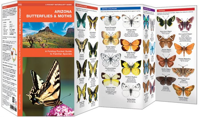 Arizona Butterflies & Moths (Pocket Naturalist® Guide).