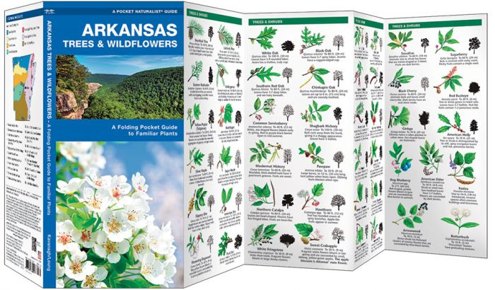 Arkansas Trees & Wildflowers (Pocket Naturalist® Guide)