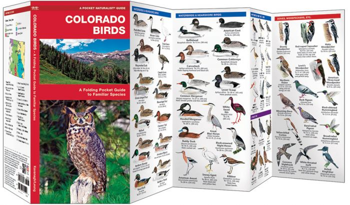 Colorado Birds (Pocket Naturalist® Guide)