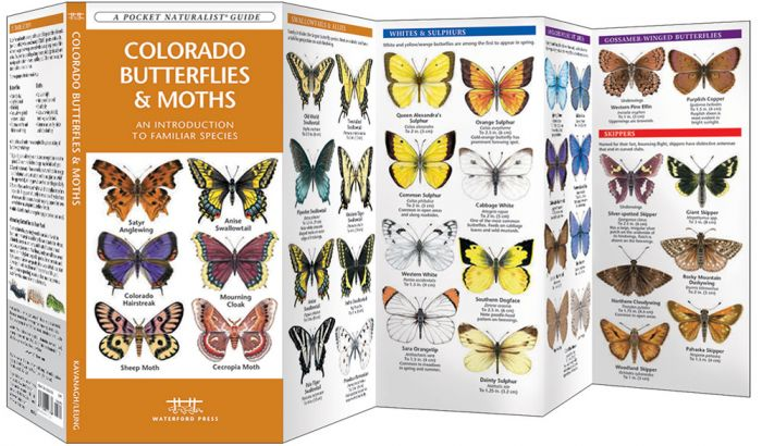 Colorado Butterflies & Moths (Pocket Naturalist® Guide).