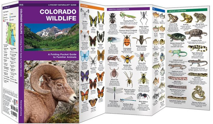Colorado Wildlife (Pocket Naturalist® Guide)