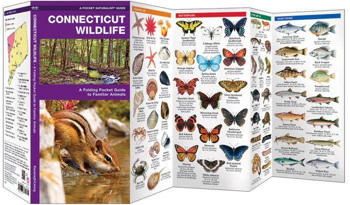 Connecticut Wildlife (Pocket Naturalist® Guide).