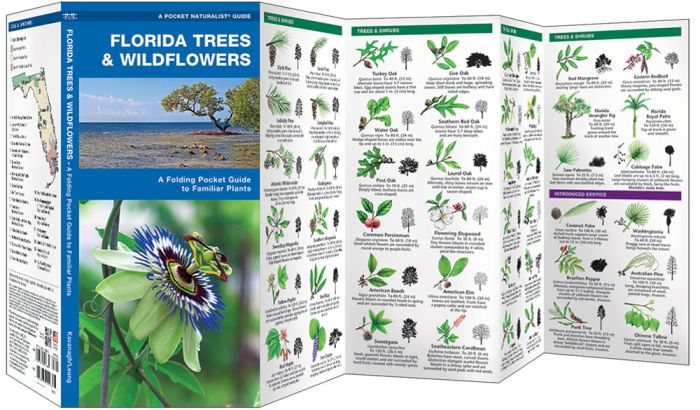 Florida Trees & Wildflowers (Pocket Naturalist® Guide).