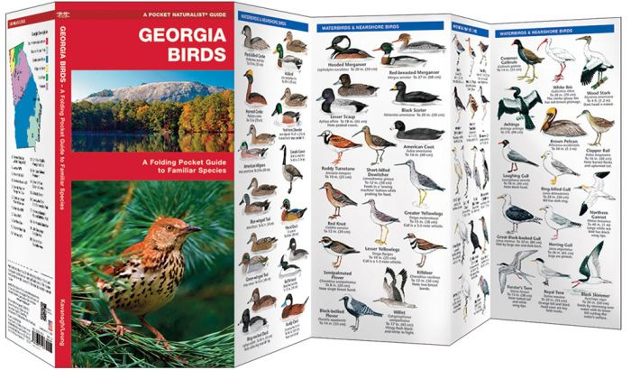 Georgia Birds (Pocket Naturalist® Guide)