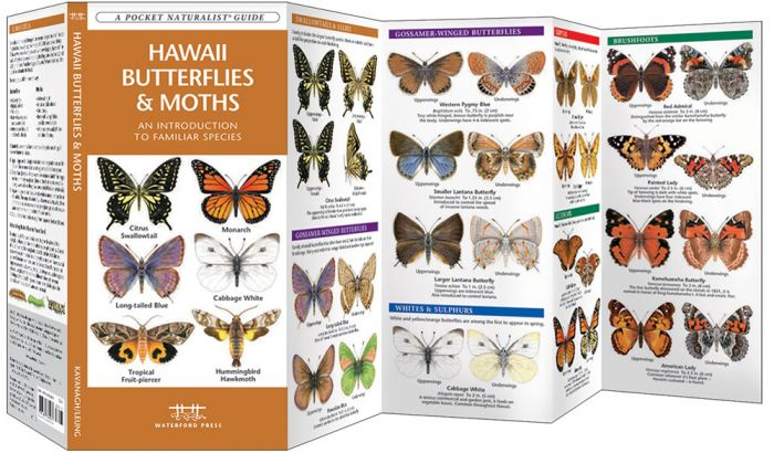 Hawaii Butterflies & Moths (Pocket Naturalist® Guide).