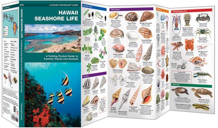 Hawaii Seashore Life (Pocket Naturalist® Guide).
