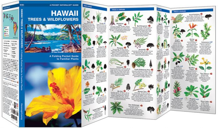 Hawaii Trees & Wildflowers (Pocket Naturalist® Guide).