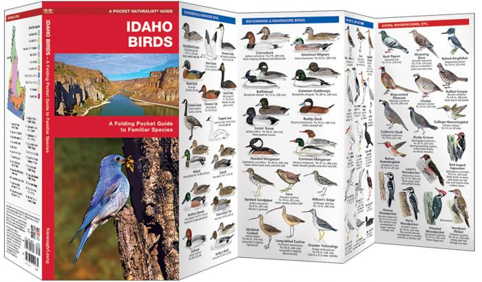 Idaho Birds (Pocket Naturalist® Guide).