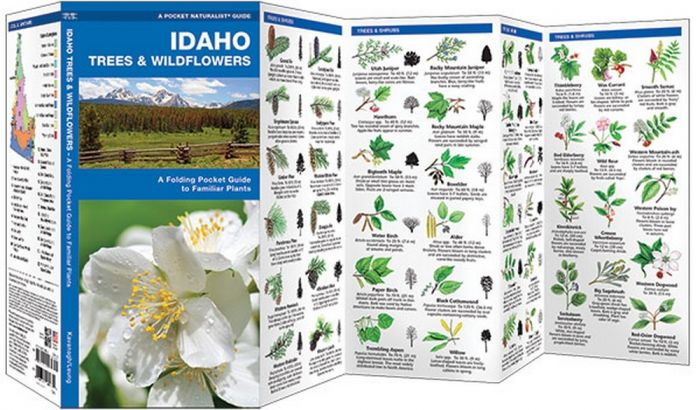 Idaho Trees & Wildflowers (Pocket Naturalist® Guide)