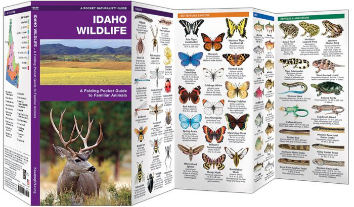 Idaho Wildlife (Pocket Naturalist® Guide).