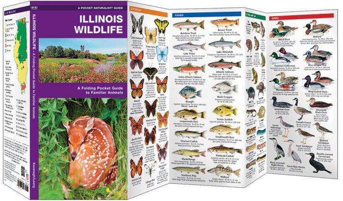 Illinois Wildlife (Pocket Naturalist® Guide).