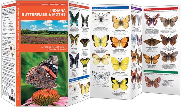 Indiana Butterflies & Moths (Pocket Naturalist® Guide)