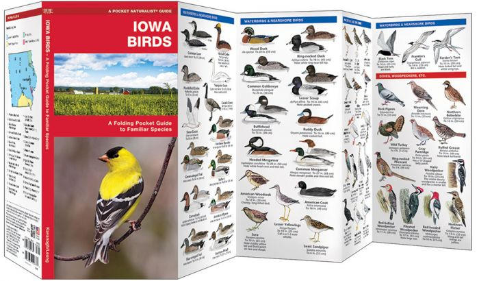 Iowa Birds (Pocket Naturalist® Guide)