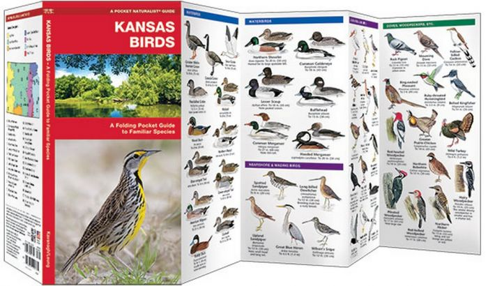 Kansas Birds (Pocket Naturalist® Guide)
