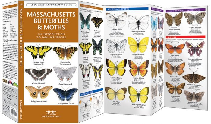 Massachusetts Butterflies & Moths (Pocket Naturalist® Guide).
