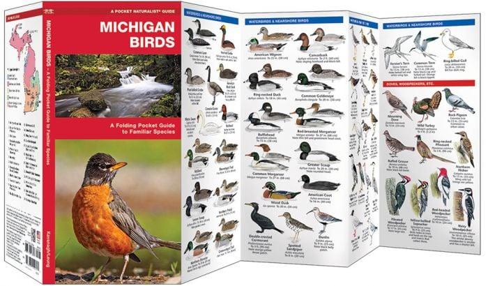 Michigan Birds (Pocket Naturalist® Guide).