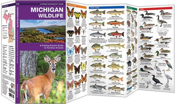 Michigan Wildlife (Pocket Naturalist® Guide)