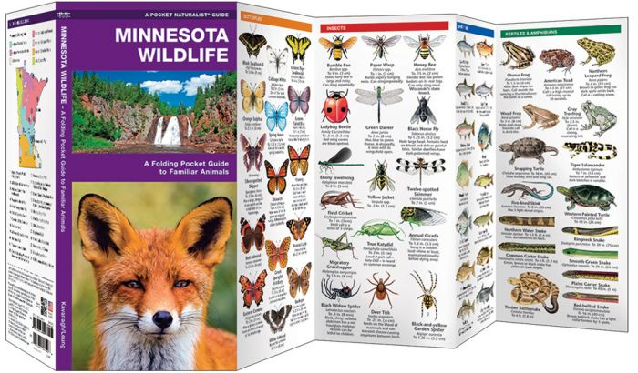 Minnesota Wildlife (Pocket Naturalist® Guide).