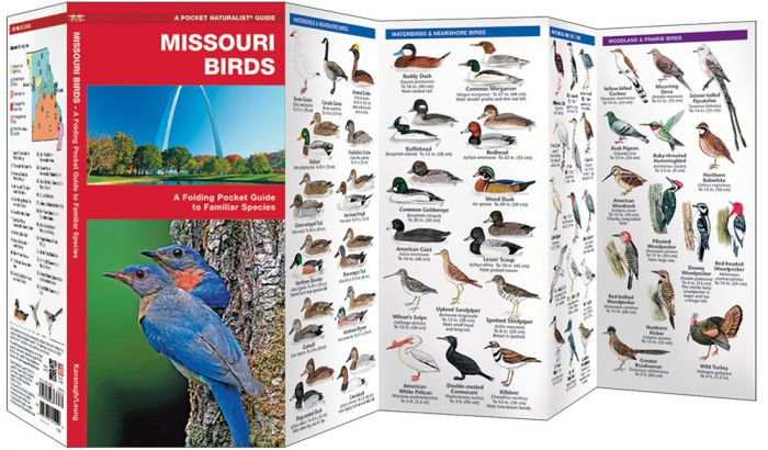 Missouri Birds (Pocket Naturalist® Guide).