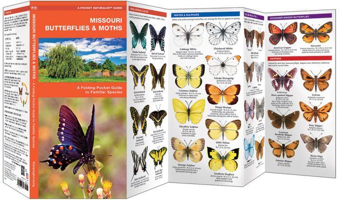 Missouri Butterflies & Moths (Pocket Naturalist® Guide)
