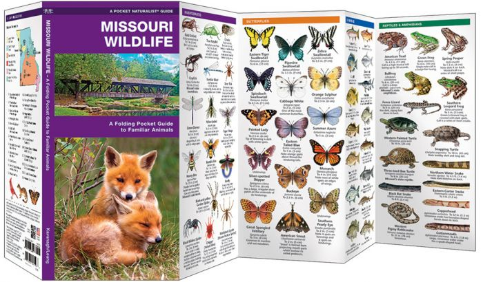 Missouri Wildlife (Pocket Naturalist® Guide)