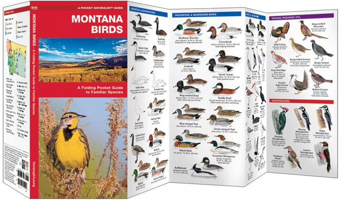 Montana Birds (Pocket Naturalist® Guide).