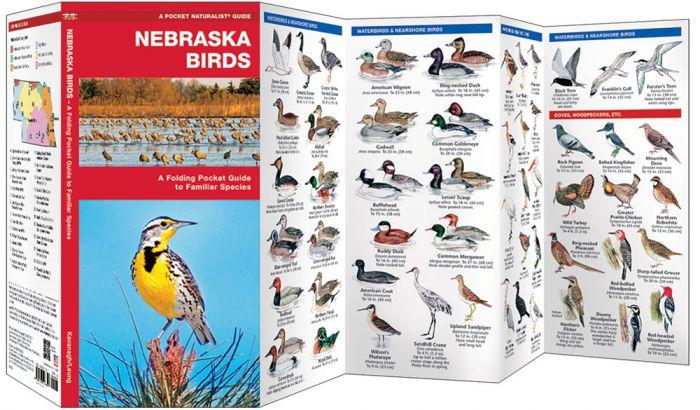 Nebraska Birds (Pocket Naturalist® Guide)