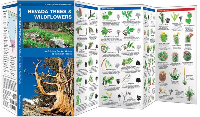 Nevada Trees & Wildflowers (Pocket Naturalist® Guide)