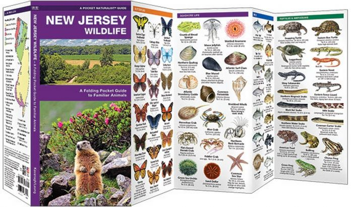 New Jersey Wildlife (Pocket Naturalist® Guide)