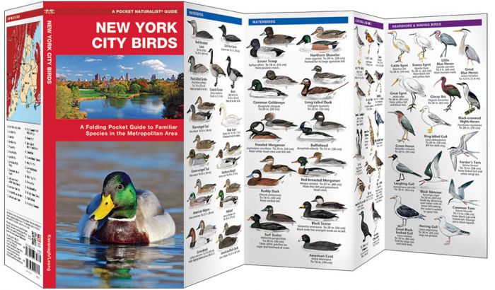 New York City Birds (Pocket Naturalist® Guide).
