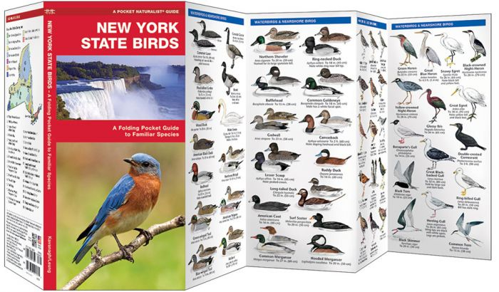 New York State Birds (Pocket Naturalist® Guide).