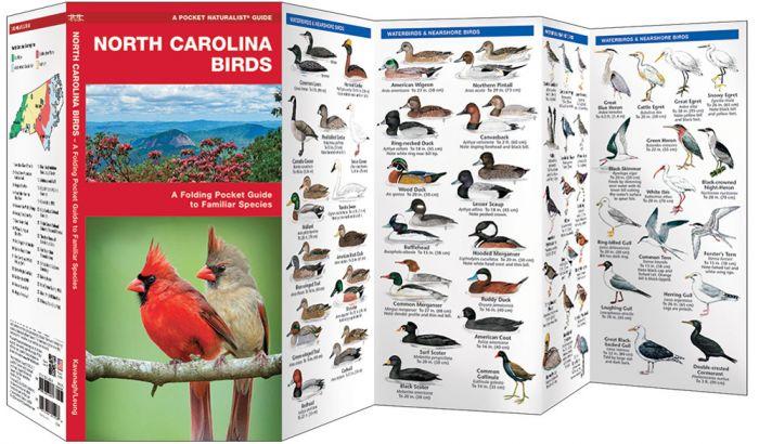 North Carolina Birds (Pocket Naturalist® Guide).