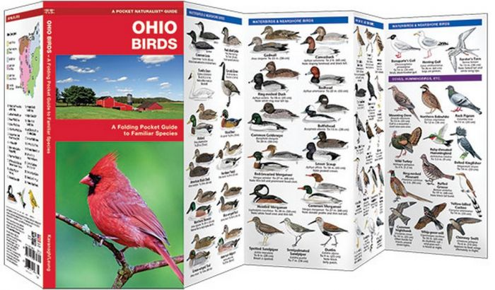 Ohio Birds (Pocket Naturalist® Guide)