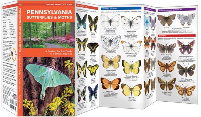 Pennsylvania Butterflies & Moths (Pocket Naturalist® Guide).