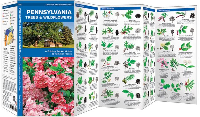 Pennsylvania Trees & Wildflowers (Pocket Naturalist® Guide)