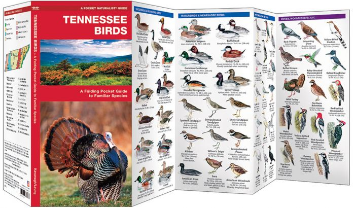 Tennessee Birds (Pocket Naturalist® Guide).